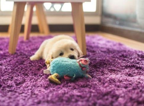 cachorro com seu brinquedo