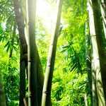 As diretivas antecipadas de vontade e sua relevância na longevidade