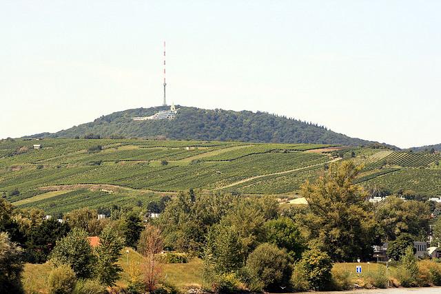 i vini prodotti a Vienna
