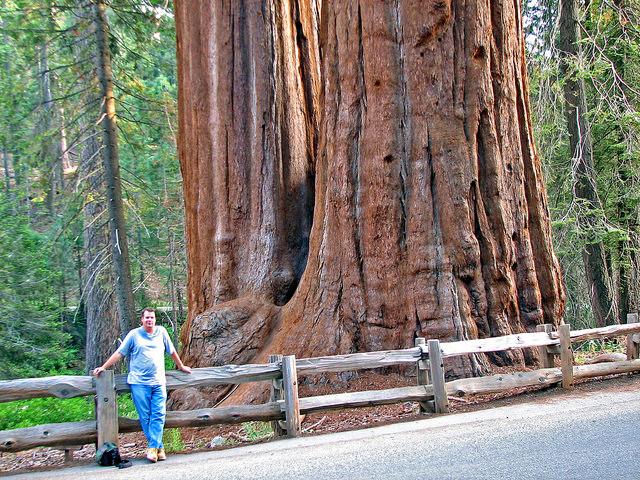 alberi più alti del pianeta