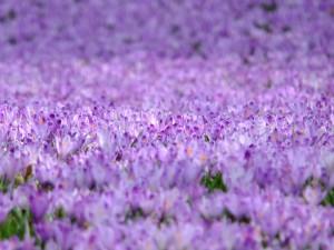 Viaggi e colori viola