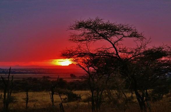 safari-africa-est
