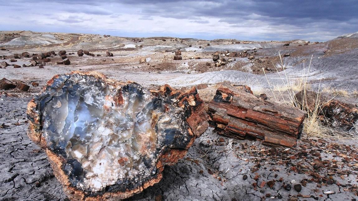 foreste pietrificate Argentina
