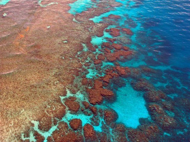 grande barriera corallina minacciata