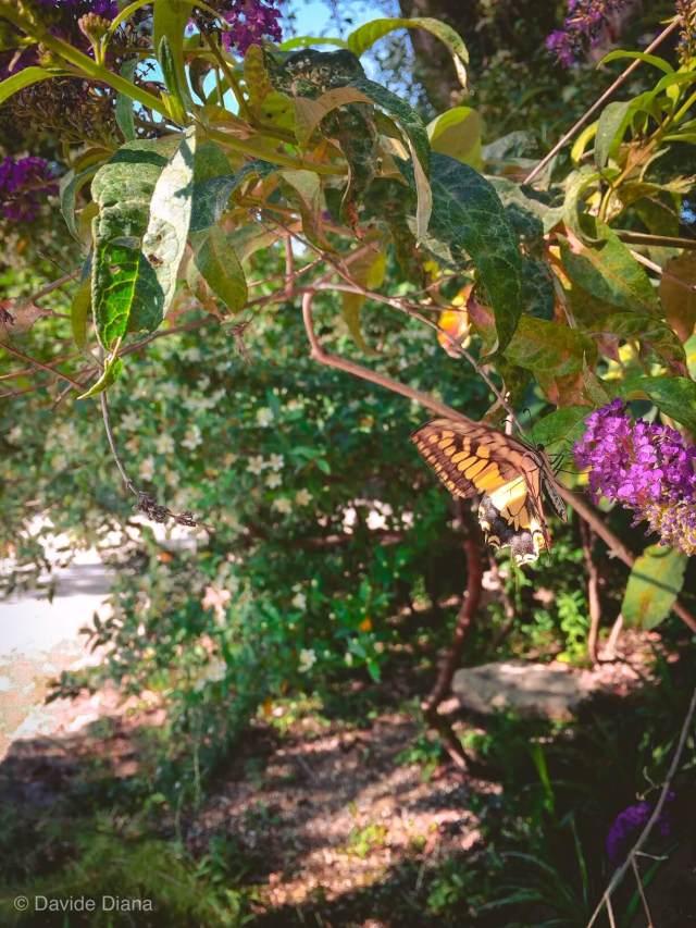 visitare i Giardini di Avignone