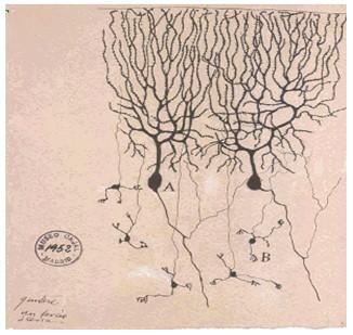 historia_sinapsis_neuronal/neuronas_material_argirofilo