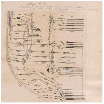 historia_sinapsis_neuronal/neuronas_material_argirofilo3