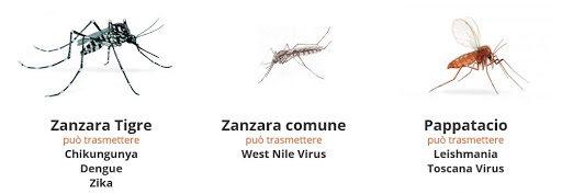 pappataci zanzare