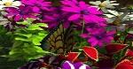 my-garden4