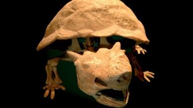 Foto de Fóssil do Bowser encontrado! Espera, o King Koopa está finalmente morto após várias derrotas?