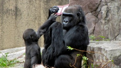 Photo of Nintendo leva Donkey Kong para o zoológico! [Wii]