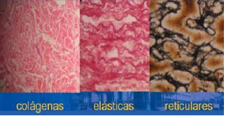 http://histologia-embriologia.blogspot.com.br/2010/04/tejido-conectivo.html