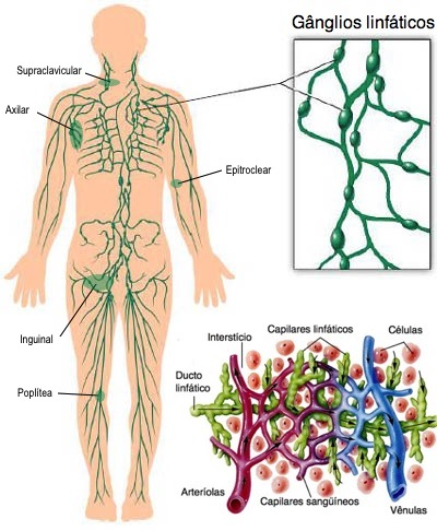Onde ficam nossos gânglios linfáticos?