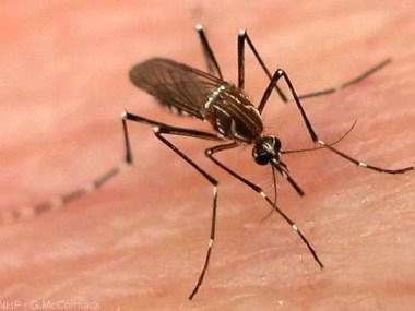Confirmada morte por Dengue em SP