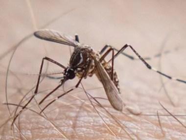 Flórida confirma primeiro caso de chikungunya transmitido nos EUA