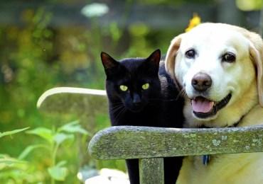 Saúde do Pet em foco