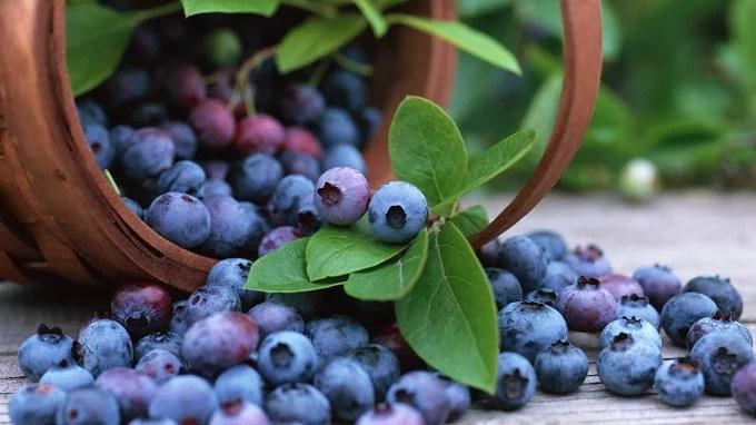 Por que não existem alimentos azuis na natureza?
