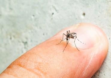 Infecção anterior pelo vírus da dengue não agrava quadro de zika, diz estudo