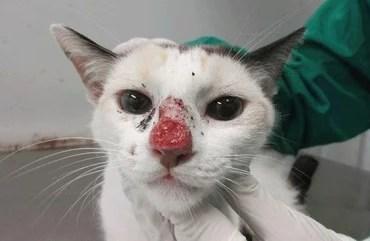 Doença afeta gatos e humanos