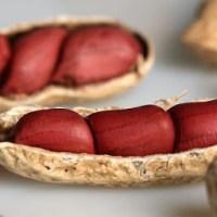 Alimentos reimosos dificultam cicatrização
