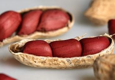 Cerca de 40% do amendoim brasileiro pode estar contaminado, diz nutricionista