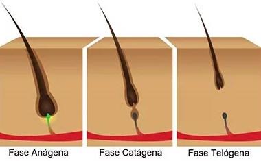 Fios de cabelo passam por diversas fases
