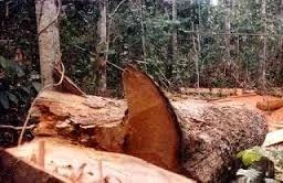 12.288 hectares de desmatamento na Bahia