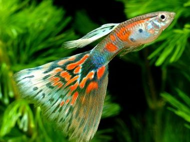 Referência em DNA de peixes