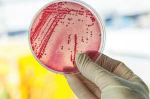 alx_disco_com_bacterias_original2