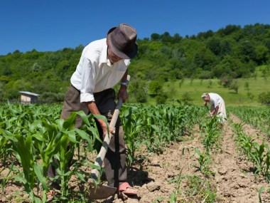 A saúde do trabalhador rural
