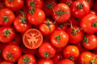 Solanina existente no tomate pode prejudicar a saúde