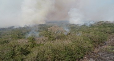 Fogo que destruiu 25 mil hectares no Pantanal de MS começou em grandes fazendas