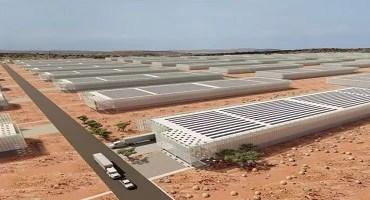 Brasileiro projeta estufas para produção de alimentos em deserto na África