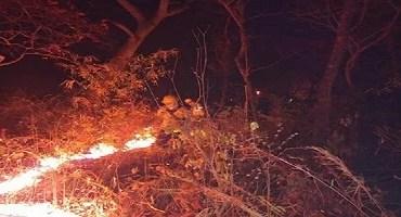 Área queimada no Pantanal se aproxima de recorde do ano passado