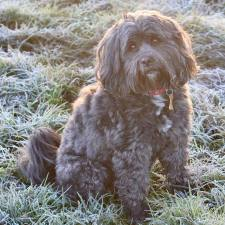 Nolly the Tibetan Terrier is the latest dog ranger in December