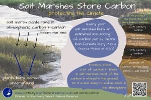 Salt Marsh Carbon