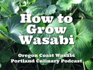 How to Grow Wasabi In Your Backyard – Portland Culinary Podcast Episode 34 by Steven Shomler