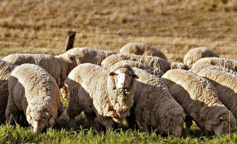 الاستثمار في مزارع تربية الحيوان