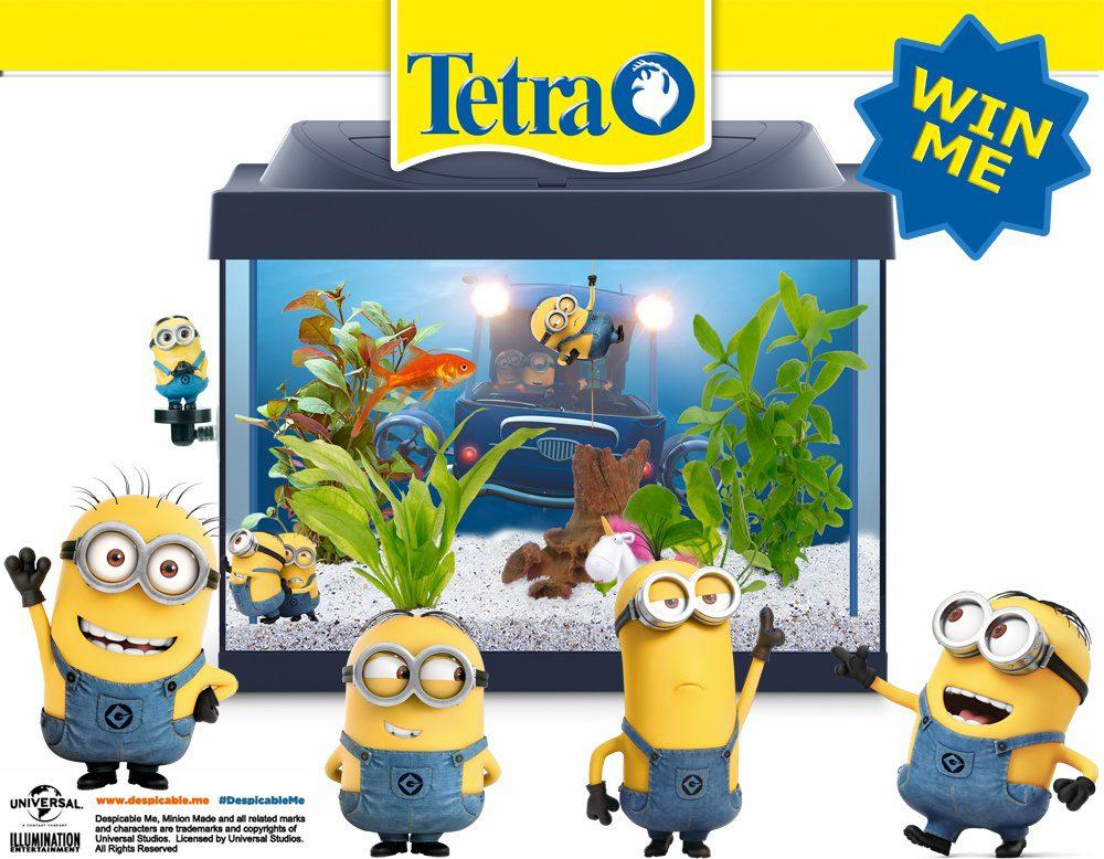 Minion aquarium competition
