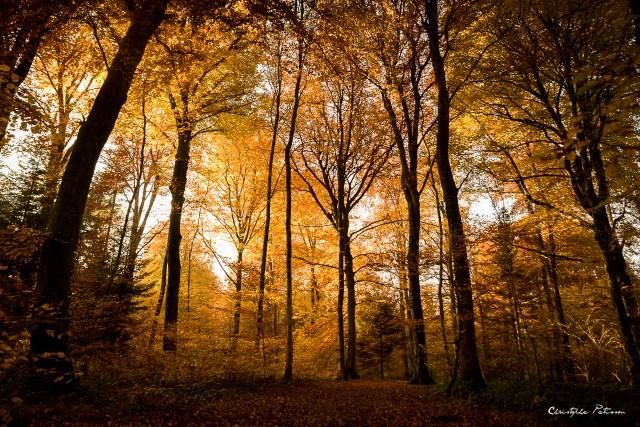Couleurs de la forêt en automne