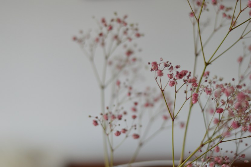 delicate, tiny pink flowers