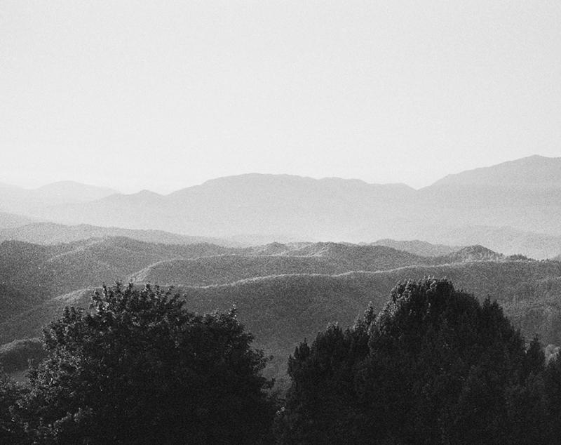 7_Bluebird©Anna Faragona
