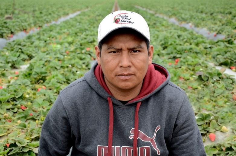 manager at La Esperanza strawberry fields. Oxnard,CA