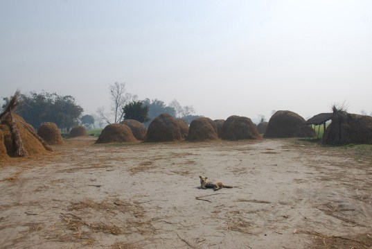 An early morning in Lauriya brings a sleepy, smoky haze over the village. With high populations and the need to burn crops and piles to keep away mosquitoes, smoke rises and spreads all around.