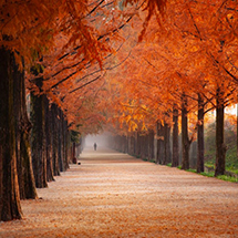 autumn-beautiful-color-2734512