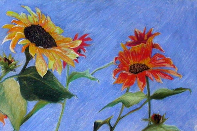 SunflowersbyCDevendorf