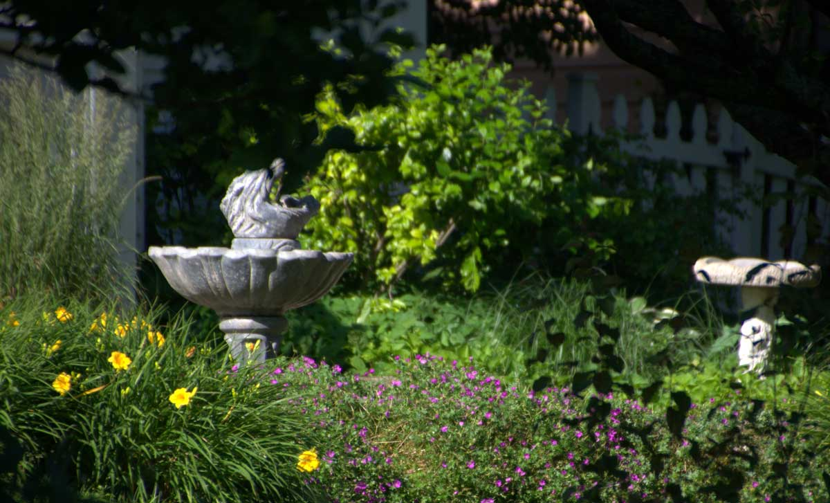 prevent pesky mosquitoes from breeding in your yard positively