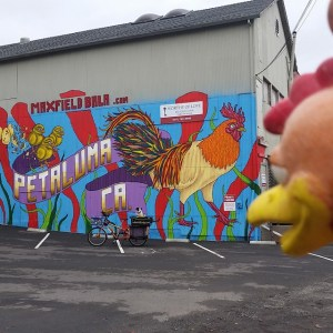 Bixby & Chicken Charlie Admiring Petaluma Wall Mural