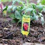 Raised Garden Update