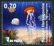 Morska Fauna – Meduza